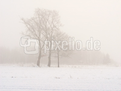 nebel in den feldern  10