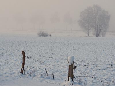 nebel in den feldern  11