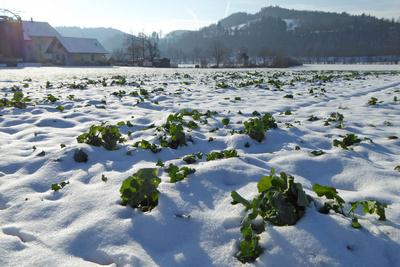 Winterruhe auf den Feldern