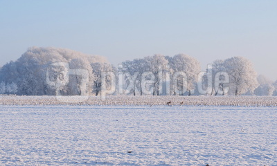 ein bilderbuch wintermorgen 2