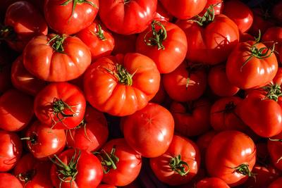 prachtvolle Tomaten