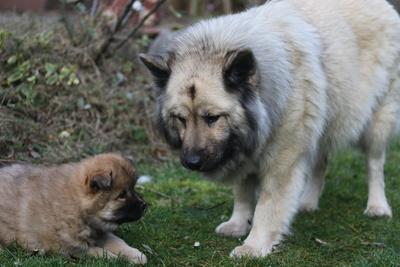 Bella mit Annie