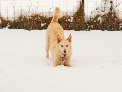 husky's-lieblingswetter