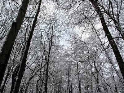 Blick in die Baumspitzen