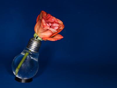 rose in glühbirne