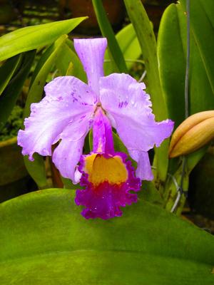 Orchideen 8
