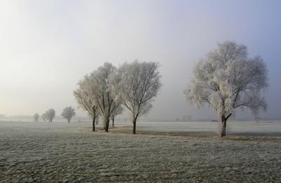 Winterlandschaft , Binzwangen