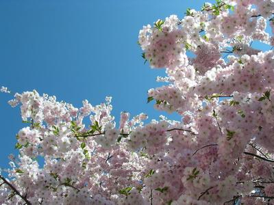Blüten am Baum