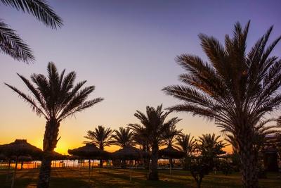 Sundown mit Palmen 2