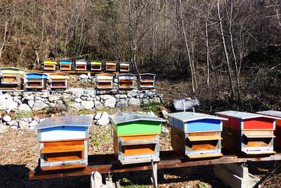 Honig-Sammelstelle