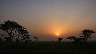 Morgens in der Savanne