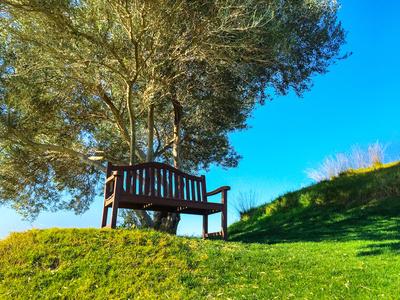 Ausblick mit Bank und Olivenbaum