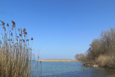 Frühling am Neuenburgersee