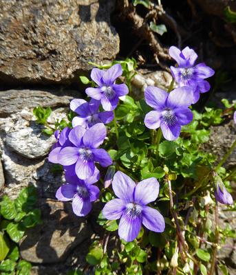 Ticino: I primi fiori