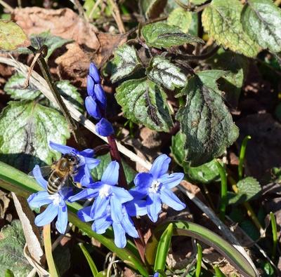 Frühlingssummen