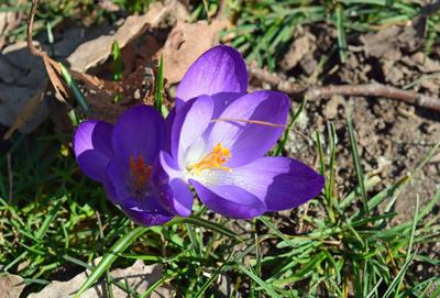 Frühlings.Pärchen