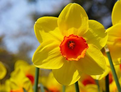 Frühling am Gardasee 1