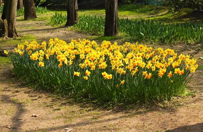 Frühling am Gardasee 4