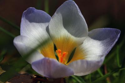 Die Farben des Frühlings 01