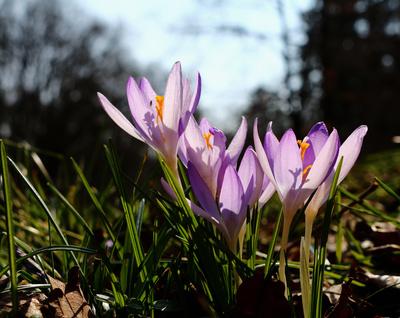 Die Farben des Frühlings 02