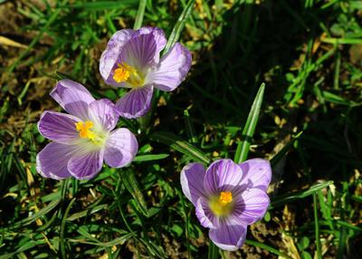 Die Farben des Frühlings 03