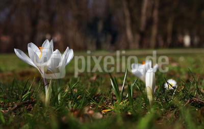 Die Farben des Frühlings 04