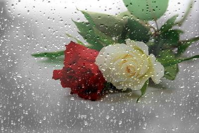 Blüten 418