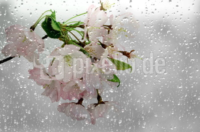 Blüten 420