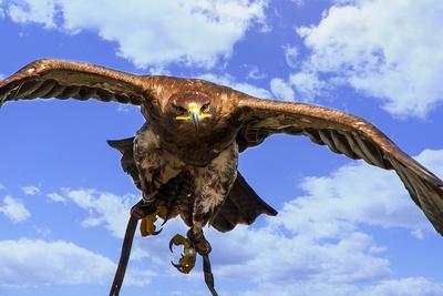 Im Angesicht des Falken