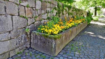 Mauerblümchen im Trog