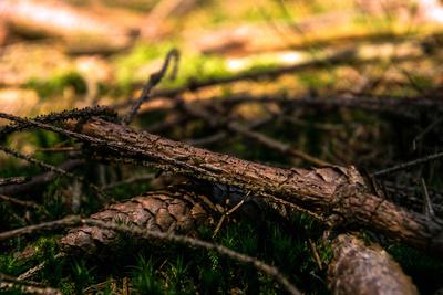 Waldboden I