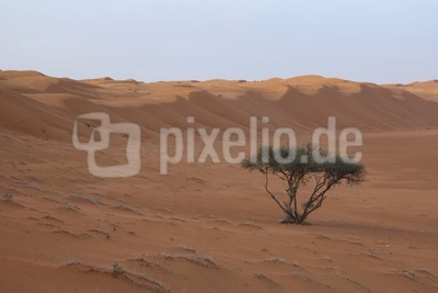 Oman - Dünen