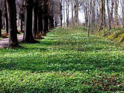 Frühling im Forst