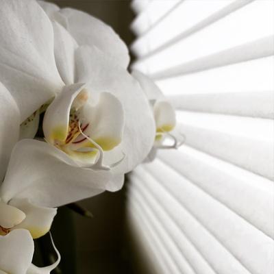 Eine Orchidee am Fenster