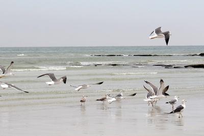 Oman - Vögel am Strand
