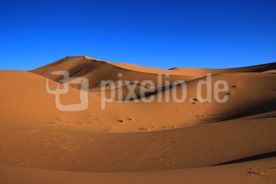 in der Sahara