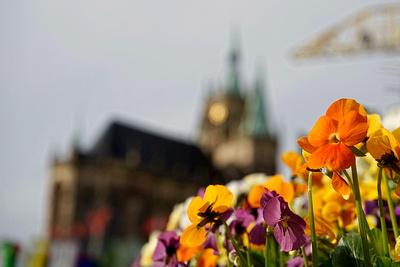 Frühling in der City