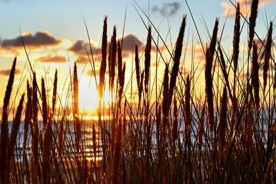 Morgensonne