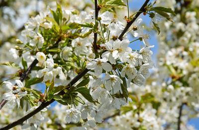 Fruchtige Blüten