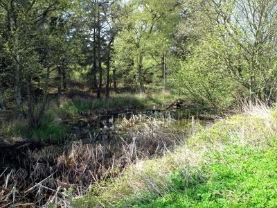 Sumpfgebiet vorm Wald