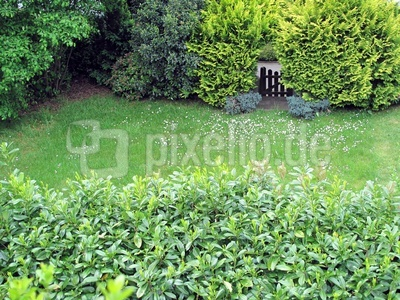Im grünen Garten