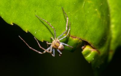 Spinne auf Futtersuche
