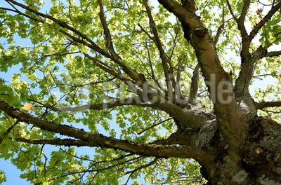 Wie viele Blätter trägt ein Baum?