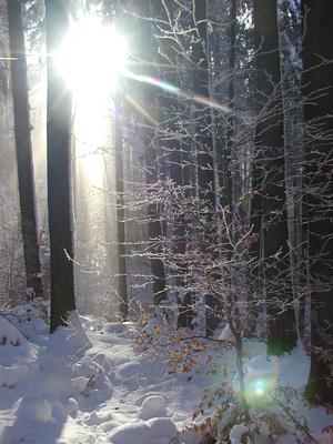 Sonnenstrahlen im Schneewald