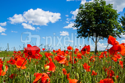 Rotes Feld (1)