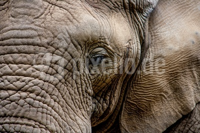 Elefant - Auge in Auge