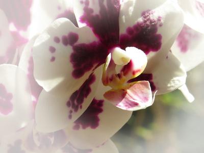 Zarte Blütenwelt