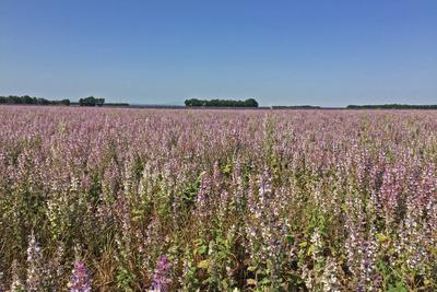 Riesige farbenprächtige Felder