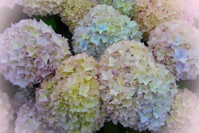 pastellige Blütenbälle