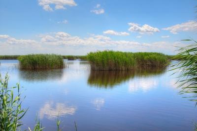 Schilfgürtel Neusiedler See